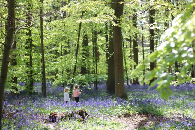 Children enjoying the spring bluebells in the Chilterns Area of Outstanding Natural Beauty.