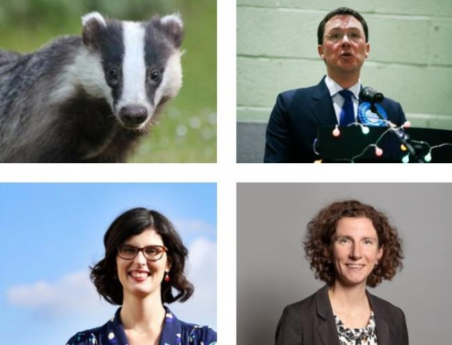 Oxfordshire MPs Robert Courts, Layla Moran and Anneliese Dodds have spoken on the badger cull being extended to the county