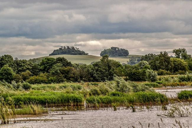 Wittenham Clumps. Picture: Roy Pyniger