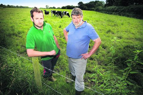 Chris White, left, is pictured with his father, dairy farmer Reuben White, and some of their herd at Cheers Farm