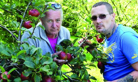 Jan Bailey, left, of the Elder Stubbs Heritage Orchard and Phil Milner, a member of the Restore Garden group, with some of the apples damaged by the weather