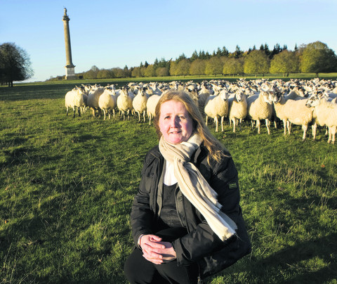 Alex Roper with the flock of rare breed Romney sheep