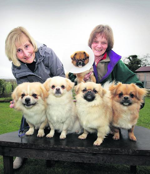 Didcot dog breeders Heather Simper and Liz Scoates