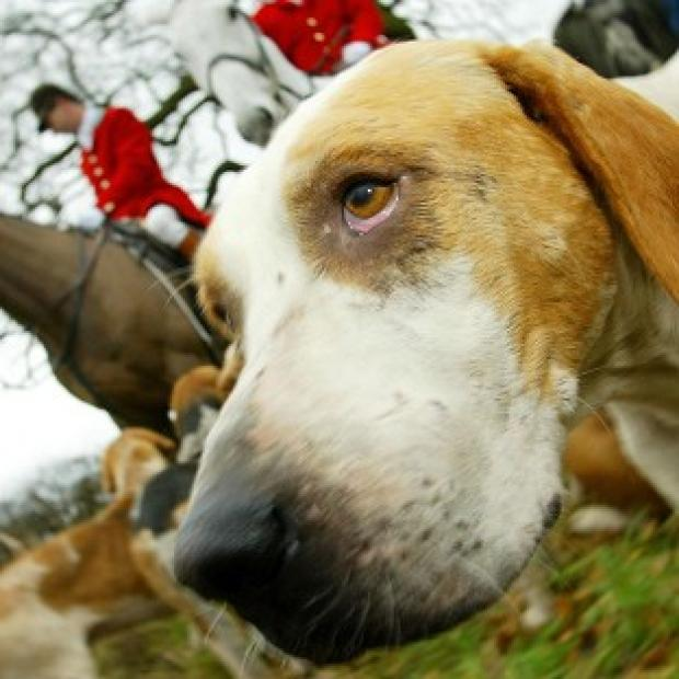 The ban on hunting with dogs came in in 2005