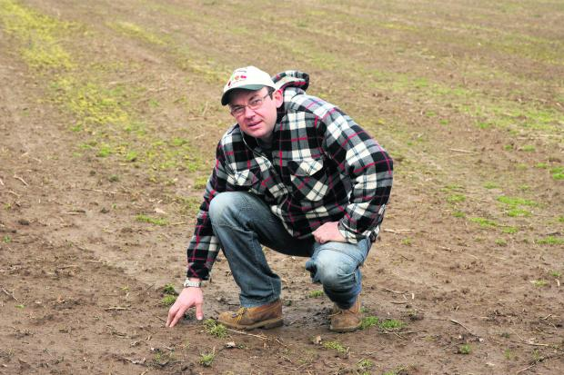 Witney Gazette: Yulian Korkinski, who manages the asparagus crop at Millets Farm   Picture: OX58175 Steve Wheeler