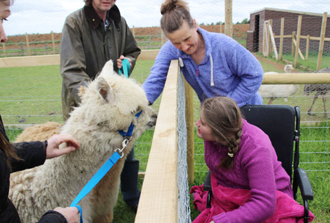 Nick Laister's daughter Olivia Laister makes friends with one of Fairytale Farm's alpacas