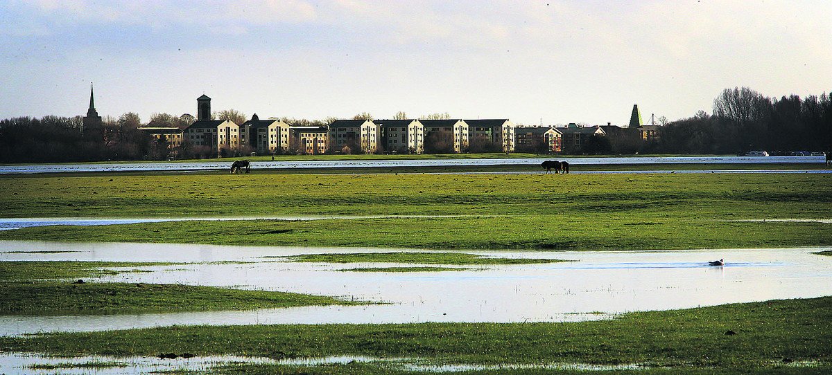 Port Meadow, Oxford, largely under water as horses graze
