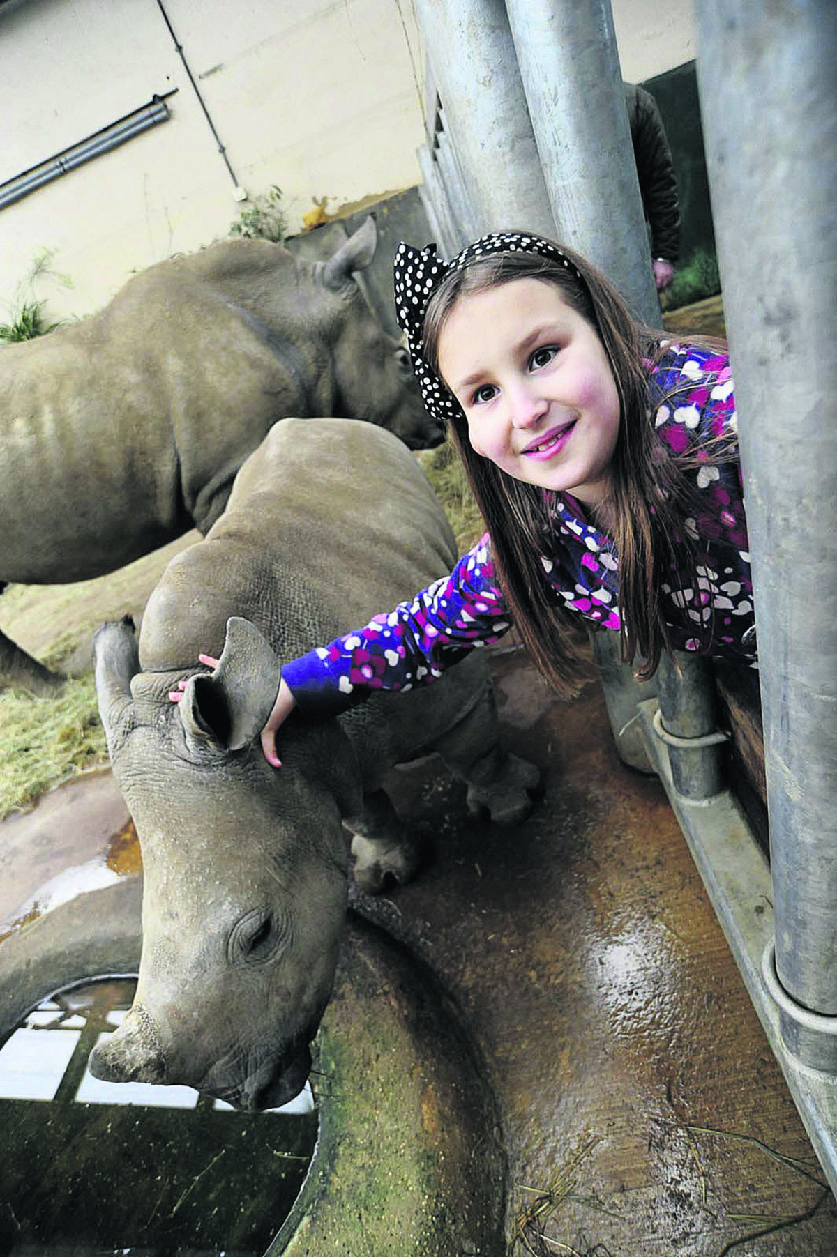 Hannah Batt-Rawden, 10, makes friends with white rhino calf Astrid
