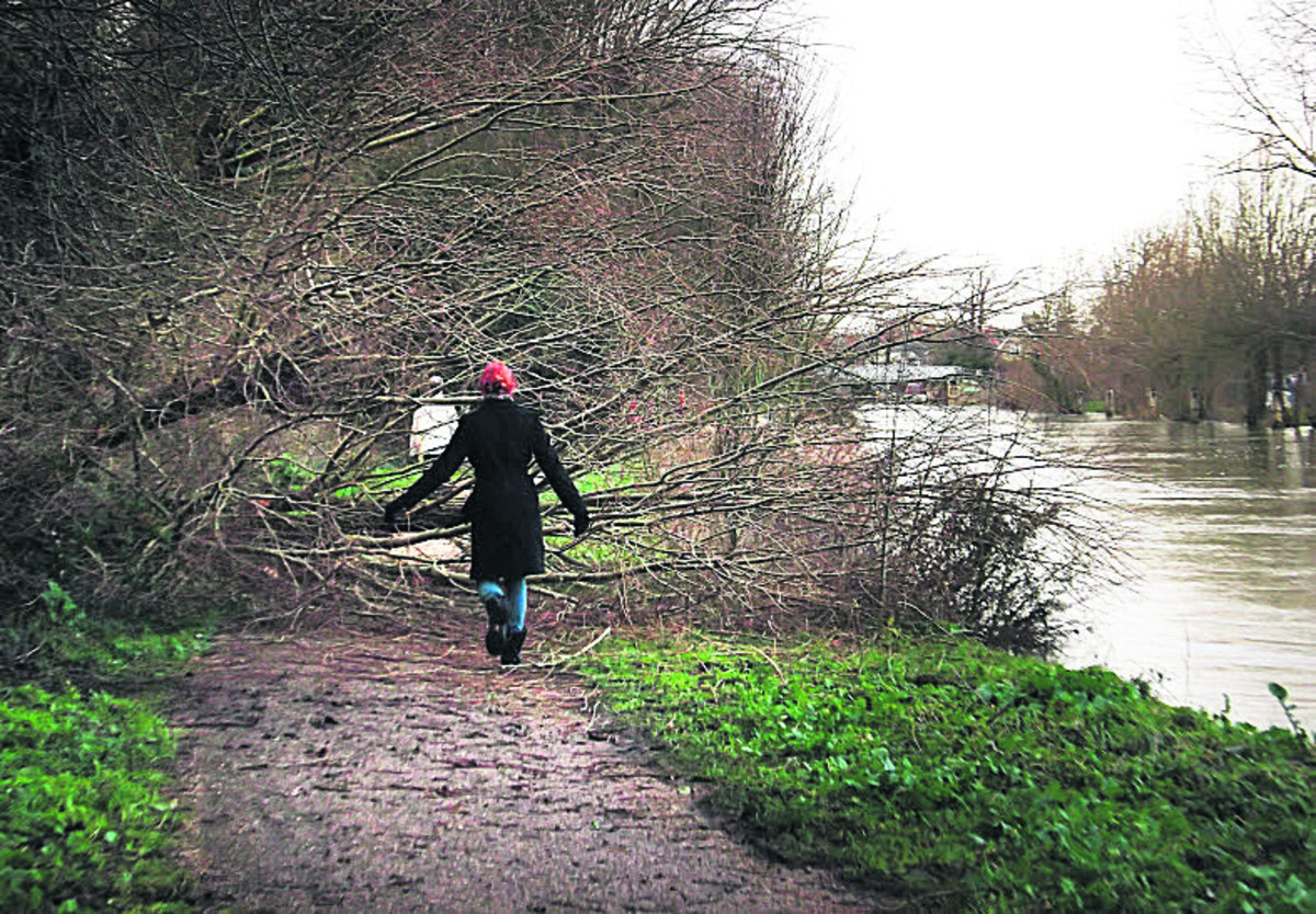 A fallen tree blocks the tow path of the Thames below Osney Lock towards Oxford yester