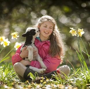 Witney Gazette: Verity Sharpe, 13, with Terence the lamb at the National Trust's Arlington Court property in Devon. (Steven Haywood/National Trust/PA)