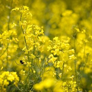 Hay fever is caused by allergy to pollens