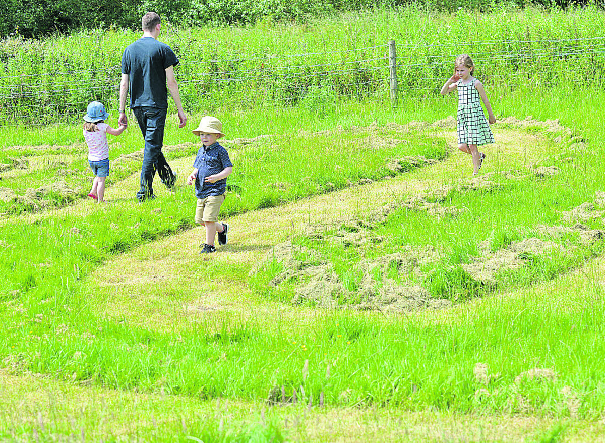 Dylan Mckinlay, four, leads the way through the maze, followed by his cousin Ella Taylor, six, and Matt Younger with three-year-old