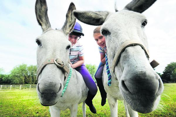 TRADITIONAL: Caitlyn Alford, right, on Rosie, and her friend Auria Peach, 11, on Rosie's daughter, Poppy
