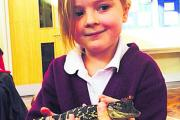 Faith Jones, five, with one of the visiting reptiles