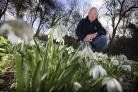 Waterperry Gardens horticultural manager Robert Jacobs fears the annual snowdrop weekend may lack snowdrops, which have bloomed already