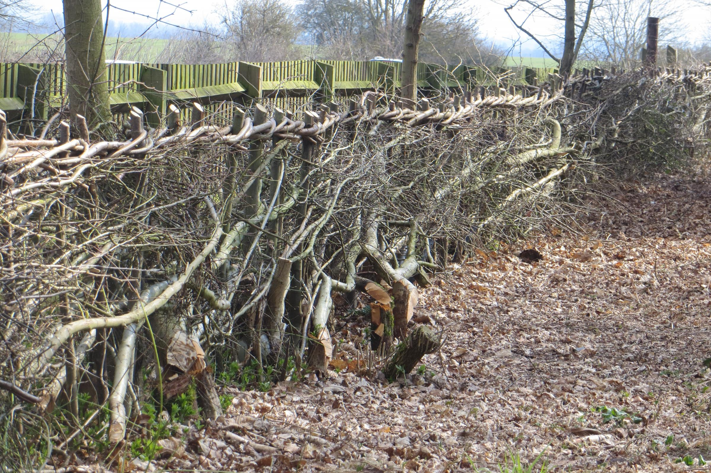 Hedge-laying Course