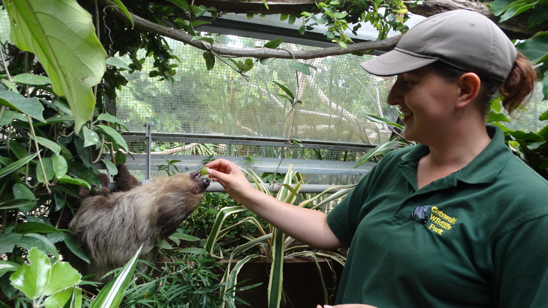 Natalie Horner with the park's new female sloth, Flash Picture: Cotswold Wildlife Park